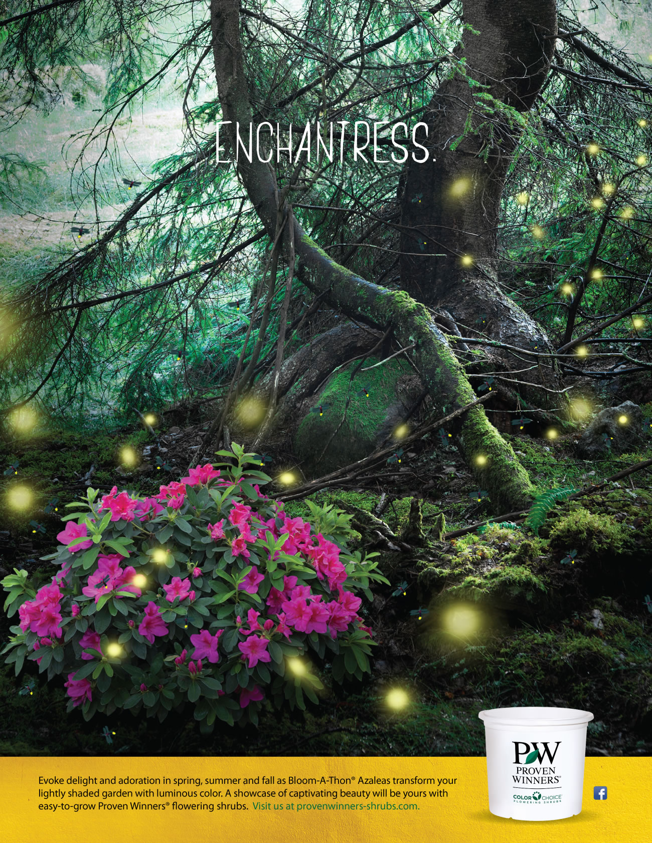 Proven Winners Personas Enchantress Print Ad